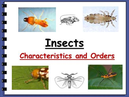 Insects Characteristics and Orders. What You Should Know About Insects …