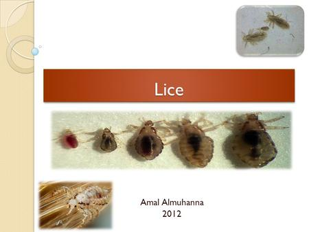 LiceLice Amal Almuhanna 2012. Order :Phthiraptera (lice) Identification Small, flattened & wingless Short stout legs; end in strong claws Permanent ectoparasites.