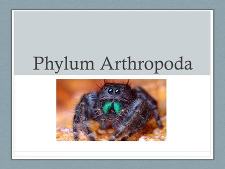 Phylum Arthropoda. Greek: arthro = jointed + pod = foot Huge group!! > 1,000,000 species - 84% of all animal species are arthropods!! How can we explain.