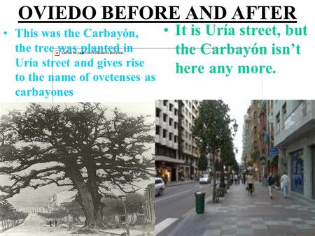 OVIEDO BEFORE AND AFTER This was the Carbayón, the tree was planted in Uría street and gives rise to the name of ovetenses as carbayones It is Uría street,