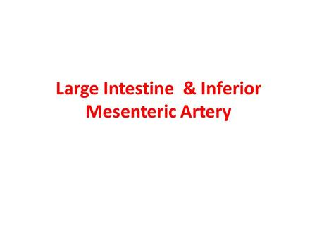 Large Intestine & Inferior Mesenteric Artery
