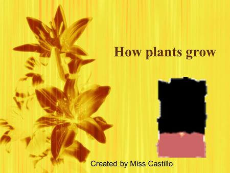 How plants grow Created by Miss Castillo.  Can you think of what a plant might need in order to flourish and grow?
