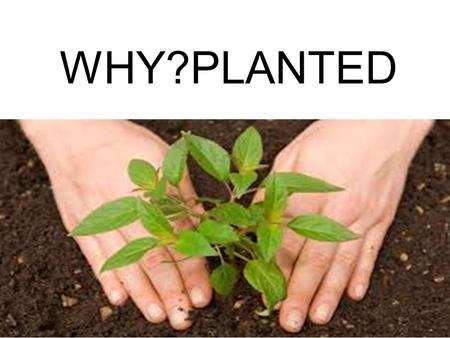 WHY?PLANTED. The righteous will flourish like a palm tree, they will grow like a cedar of Lebanon; 13 planted in the house of the Lord, they will flourish.