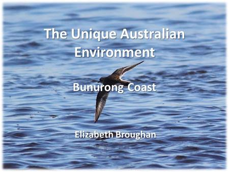 The Unique Australian Environment Bunurong Coast Elizabeth Broughan.