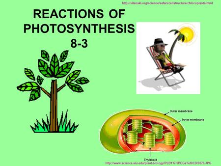 REACTIONS OF PHOTOSYNTHESIS 8-3