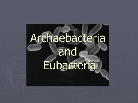 Archaebacteria and Eubacteria. What are bacteria? ► Bacteria are prokaryotes (no membrane bound nucleus) ► Smallest living known cells ► Found Everywhere.