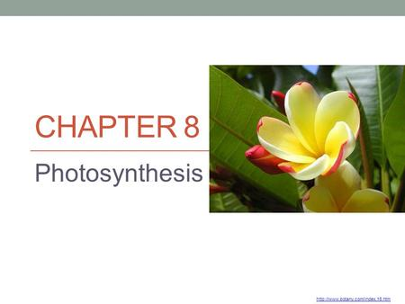 Chapter 8 Photosynthesis http://www.botany.com/index.16.htm.