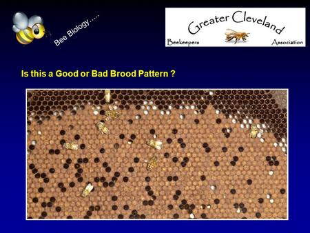 Is this a Good or Bad Brood Pattern ? Bee Biology…..