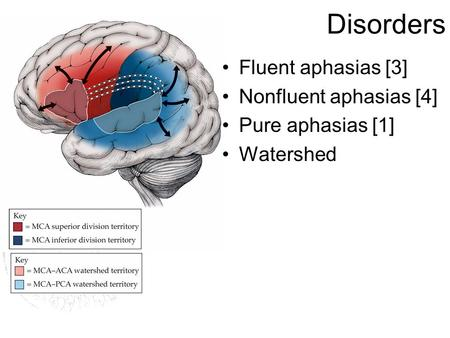 Disorders Fluent aphasias [3] Nonfluent aphasias [4] Pure aphasias [1] Watershed.