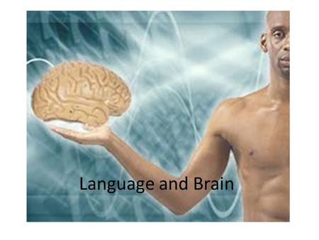 Language and Brain. Is Language Situated in our Brain? Neurolinguistics is the study of how the brain processes language.