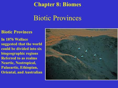 Biotic Provinces In 1876 Wallace suggested that the world could be divided into six biogeographic regions Referred to as realms Neartic, Neotropical, Palaeartic,