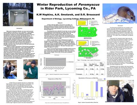 Winter Reproduction of Peromyscus in Rider Park, Lycoming Co., PA K.W Hopkins, A.K. Smolarek, and D.R. Broussard Department of Biology, Lycoming College,