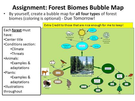 Assignment: Forest Biomes Bubble Map By yourself, create a bubble map for all four types of forest biomes (coloring is optional) - Due Tomorrow! Each forest.