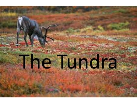 The Tundra.