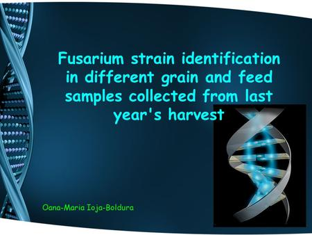 Fusarium strain identification in different grain and feed samples collected from last year's harvest Oana-Maria Ioja-Boldura.