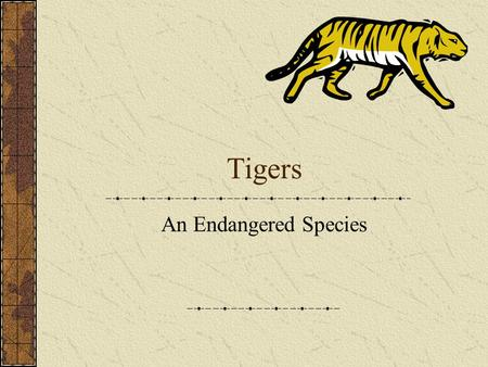 """the importance of the issue of the extinction of white tigers The bengal tiger is the most populous of all tiger species but it is endangered  the biggest problems continue to be those created by man  commonly known  as """"white tigers"""" which are either all white or white with brown stripes  arc  landscape in the foothills of the himalayas is of particular importance."""