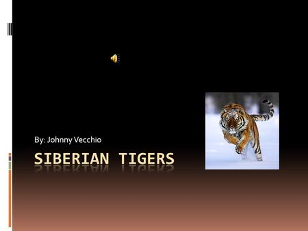 By: Johnny Vecchio Facts  Siberian tigers can run up to 30 miles per hour.  The Siberian tiger can have up to three cubs.  The cubs can only stay.