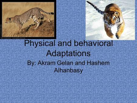Physical and behavioral Adaptations By: Akram Gelan and Hashem Alhanbasy.