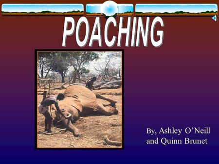 By, Ashley O'Neill and Quinn Brunet. Poaching is hunting out of season or with out a license and using traps The reason why there is endangered species.