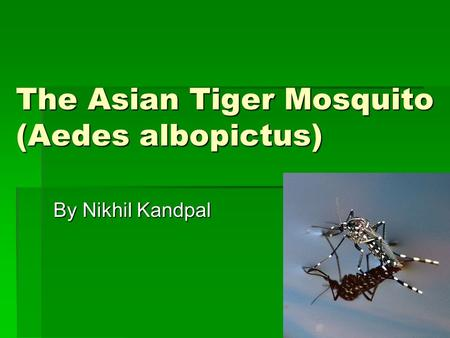 The Asian Tiger Mosquito (Aedes albopictus) By Nikhil Kandpal.