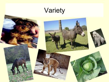 Variety. Variation Variation is the differences that exist between members of the same species. There are 2 kinds of variation – continuous and discontinuous.
