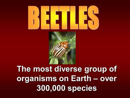 The most diverse group of organisms on Earth – over 300,000 species.
