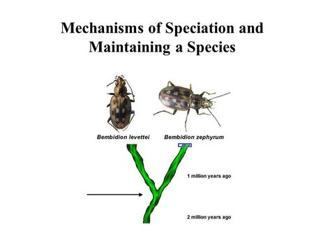 Mechanisms of Speciation and Maintaining a Species.