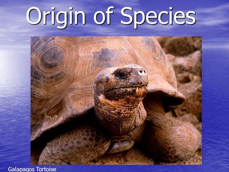 Origin of Species Galapagos Tortoise.