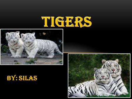 BY: SILAS. AGENDA  tigers groups  Where tigers live  How tigers ARE born & raised  how tigers adapt to environment.
