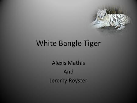 White Bangle Tiger Alexis Mathis <strong>And</strong> Jeremy Royster.