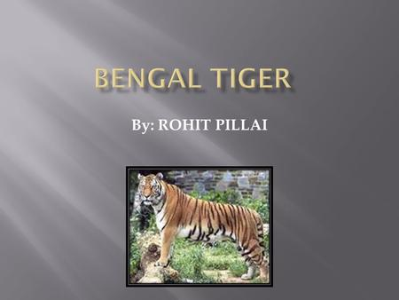 By: ROHIT PILLAI  My animal is The Bengal Tiger.