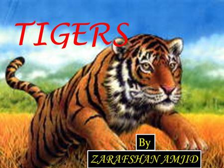 TIGERS By ZARAFSHAN AMJID. Contents Introduction---------------------------------- 02 What is Tiger? ---------------------------------- 03 Kind of tigers.----------------------------------
