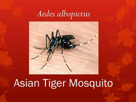 Asian Tiger Mosquito Aedes albopictus.  Native to South-East Asia  Arrived in U.S. in 1985.