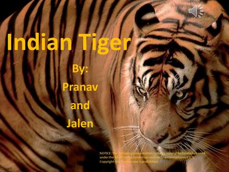Indian Tiger By: Pranav and Jalen Clip art NOTICE: The following presentation contains copyrighted materials used under the Multimedia Guidelines and.