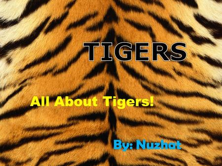 TIGERS All About Tigers! By: Nuzhat.
