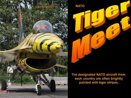 The designated NATO aircraft from each country are often brightly painted with tiger stripes. NATO NetherlandsF16.