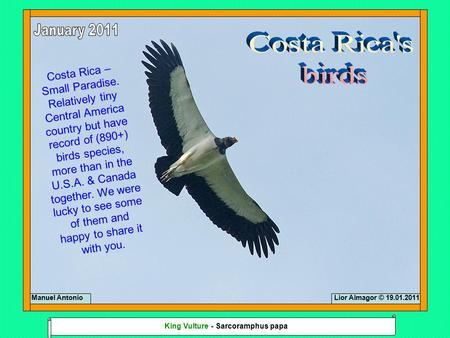 Costa Rica – Small Paradise. Relatively tiny Central America country but have record of (890+) birds species, more than in the U.S.A. & Canada together.
