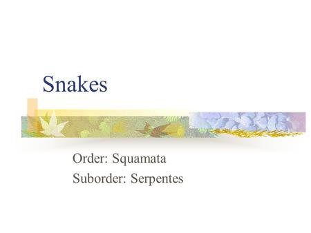 Snakes Order: Squamata Suborder: Serpentes. Keeled and Divided Anal Northern Brownsnake Northern Red-bellied Snake Black Ratsnake * Common Watersnake.