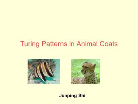 Turing Patterns in Animal Coats Junping Shi. Alan Turing (1912-1954)  One of greatest scientists in 20 th century  Designer of Turing machine (a theoretical.