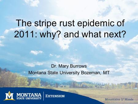 The stripe rust epidemic of 2011: why? and what next? Dr. Mary Burrows Montana State University Bozeman, MT.