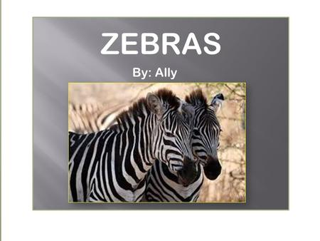 By: Ally ZEBRAS. There are many interesting facts about a zebra! One interesting fact is that zebras are black with white stripes!!! Interesting Facts.