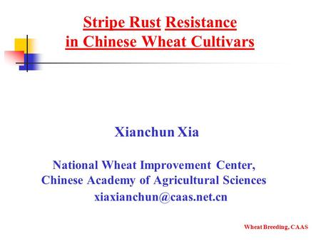 Stripe Rust Resistance in Chinese Wheat Cultivars Xianchun Xia National Wheat Improvement Center, Chinese Academy of Agricultural Sciences