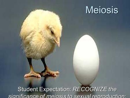Meiosis Student Expectation: RECOGNIZE the significance of meiosis to sexual reproduction;