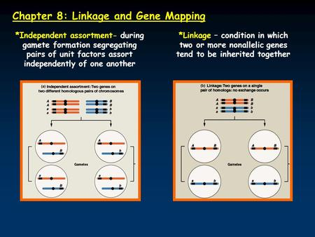 Chapter 8: Linkage and Gene Mapping *Independent assortment- during gamete formation segregating pairs of unit factors assort independently of one another.