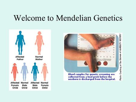 Welcome to Mendelian Genetics. Genotype Phenotype Activities of genes & gene products Environment & development Genotype = collection of genes (and alleles)