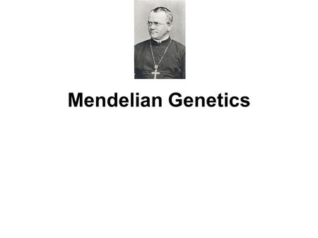 Mendelian Genetics. 1860's: Gregor Mendel described the fundamental principles of inheritance. Mendel discovered that certain traits show up in offspring.