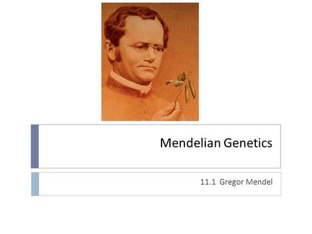 "Mendelian Genetics 11.1 Gregor Mendel. Who was Gregor Mendel?  Austrian monk  Also ""high school"" science/math teacher  One of the first to use statistics."