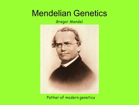 Mendelian Genetics Father of modern genetics Gregor Mendel.