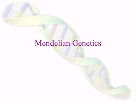 Mendelian Genetics Gregor Mendel ~ Father of modern genetics. Mendel was an Austrian monk and mathematician. One of his assignments in the monastery.