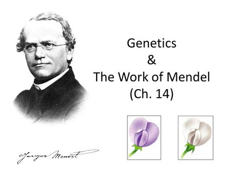 Genetics & The Work of Mendel (Ch. 14)